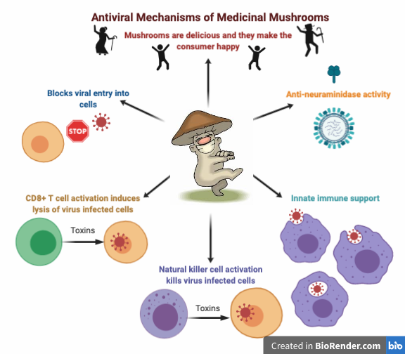 antiviral mechanisms of medicinal mushrooms